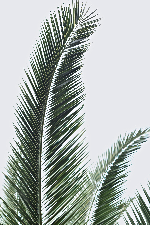 liść rośliny