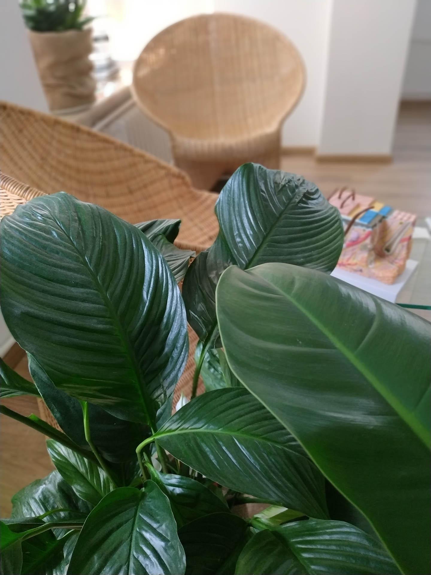 Widok na siedzenie znad liści rośliny